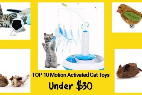 11 electronic motion activated cat toys