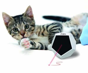 Small cat is interacted with Playdot cat laser toy.