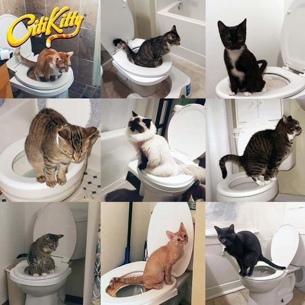 CitiKitty Cat Toilet Training Kit How to use