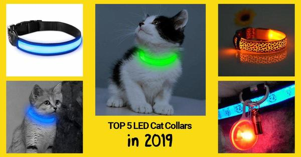 best cat led collars