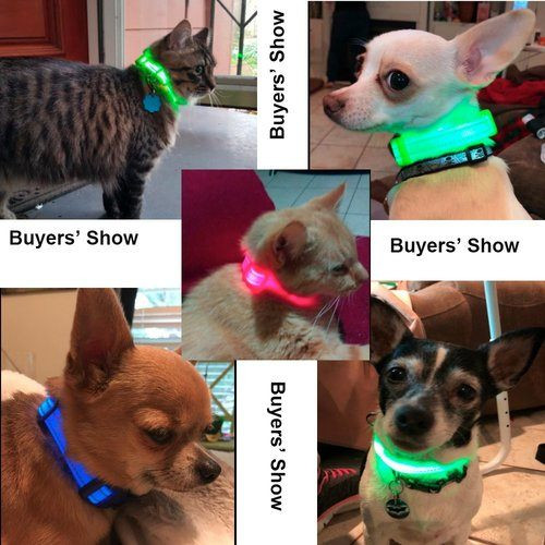 bseen led cat collar