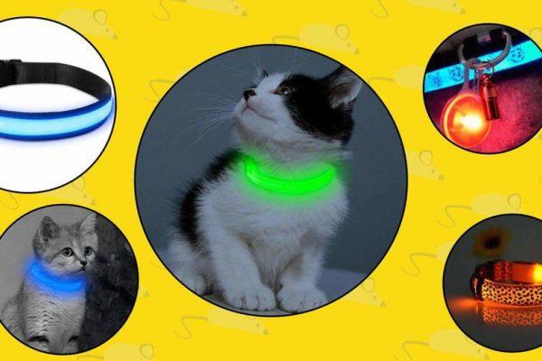 cat led collars
