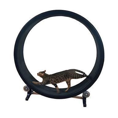 climbing cat exercise wheel