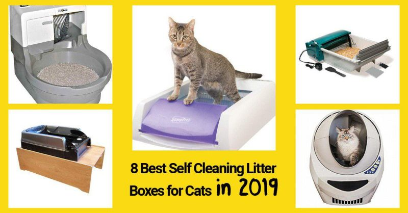 best self cleaning boxed for cats preview