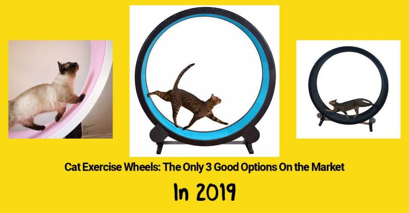 3 good options for cat exercise wheels in 2019