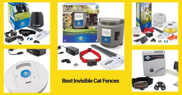 best wireless fences for cats 2019