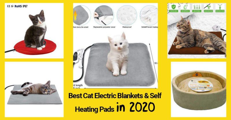 best cat electric blankets