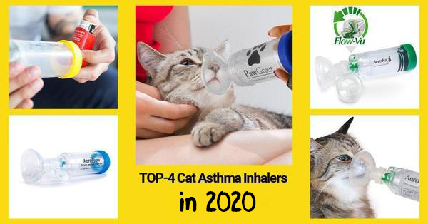 The list of the best cat inhalers for asthma in 2020 by Technomeow.