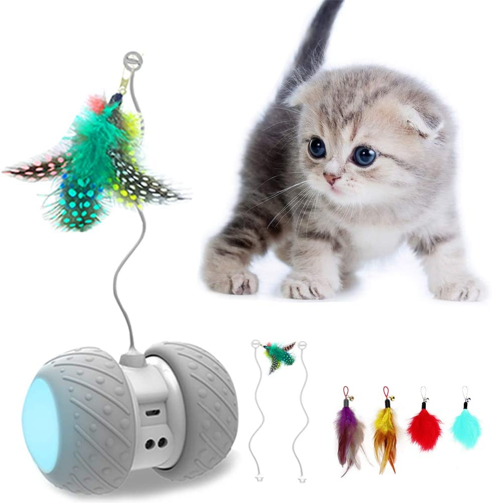 Kitten is interacted with MalsiPree Robotic Cat Toy