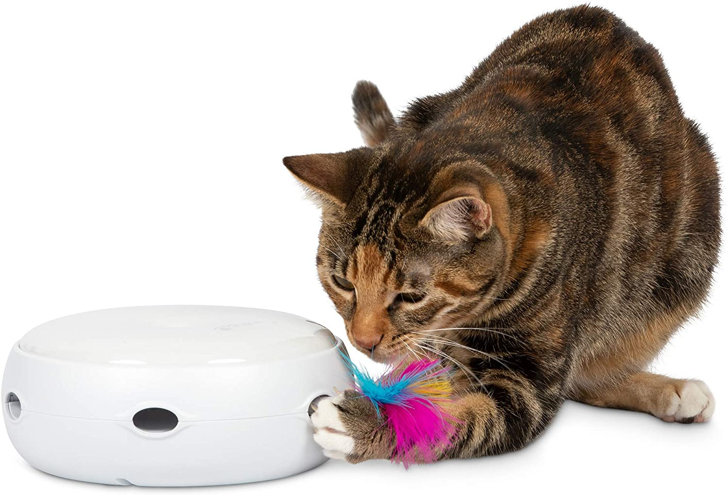 Cat is playing with PetFusion Ambush electronic rotating feather toy