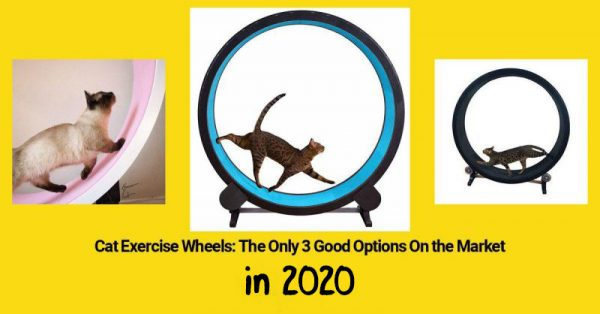 3 good options for cat exercise wheels in 2020.