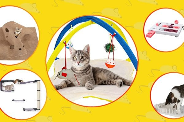 There are 5 best activity cat centers on the image but 10 in the article.
