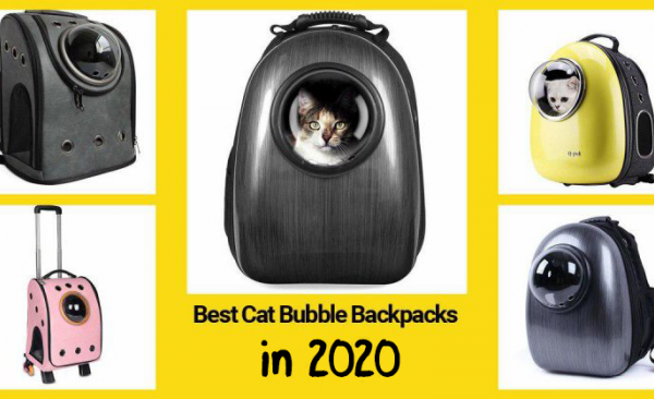 The list of 7 best cat bubble backpacks in 2020 by Technomeow.