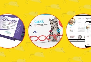 3 best Cat DNA kit available.