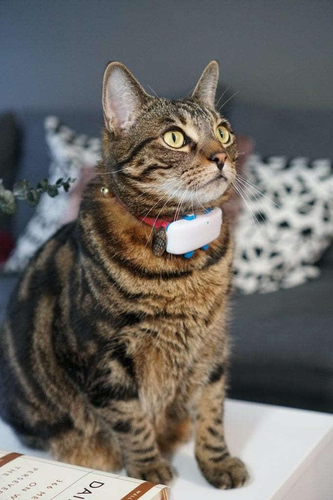 My cat with Tractive cat tracker