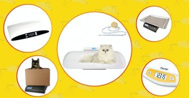 Best scales for cats