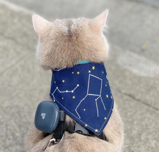 Cat with Findster Duo+ GPS collar on it