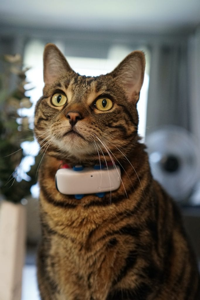 Fiona with Tractive GPS cat tracker