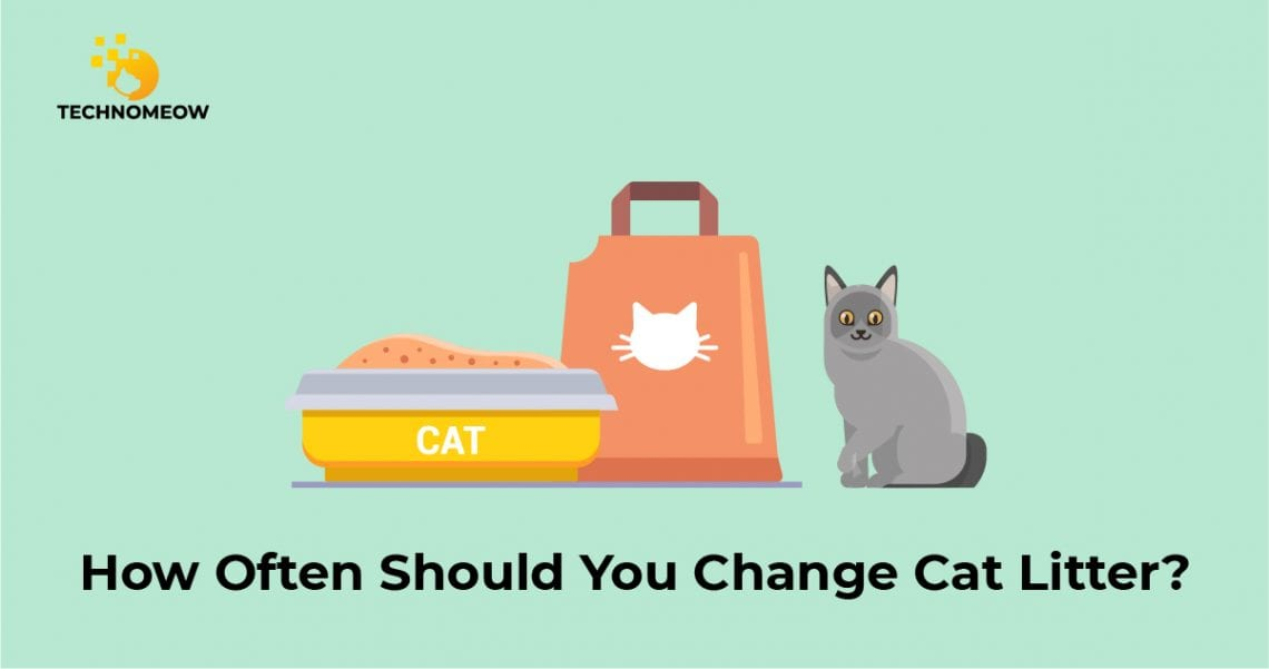 Changing litter box for cats