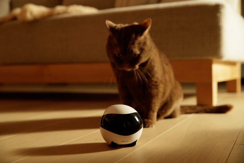 Cat is playing with Ebo Robot for the first time