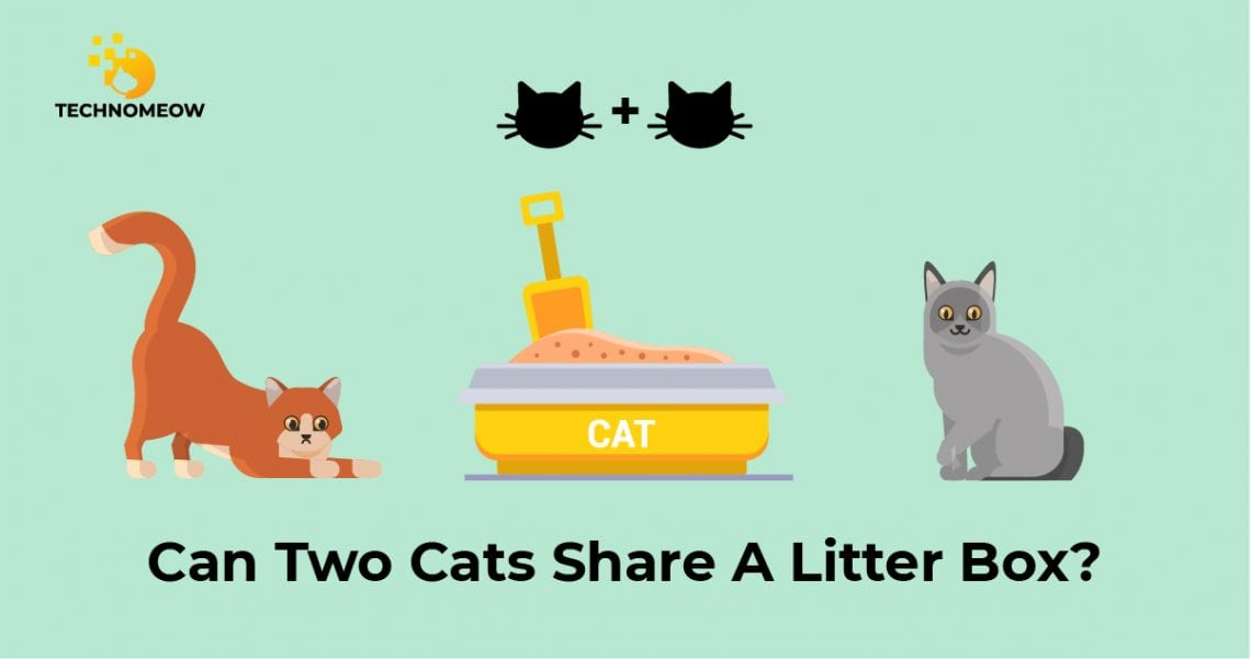 Two cats are trying to share one litter box