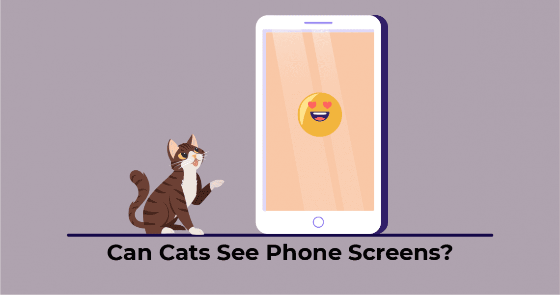 Cat looking at the phone screen