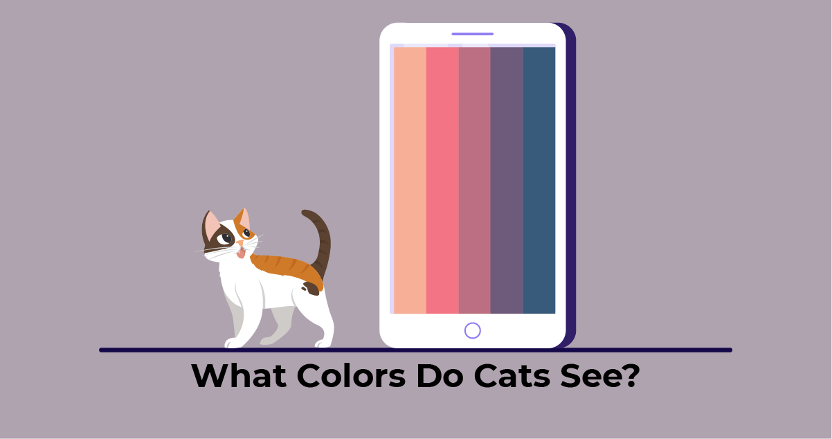 Colors that cats can see on the phone