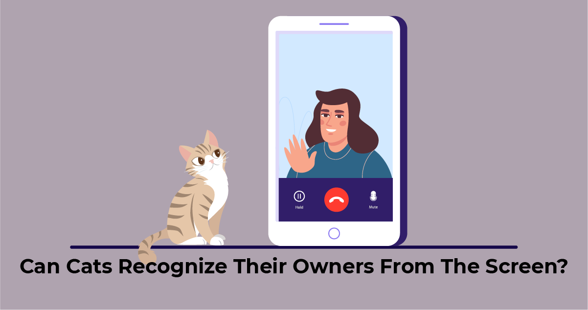 Cat can't recognize the owner from the phone screen