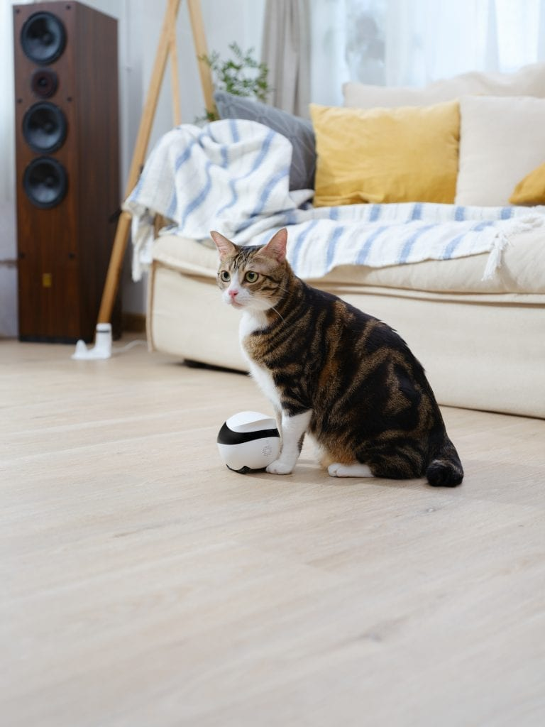 cat is interacting with Ebo Cat Robot