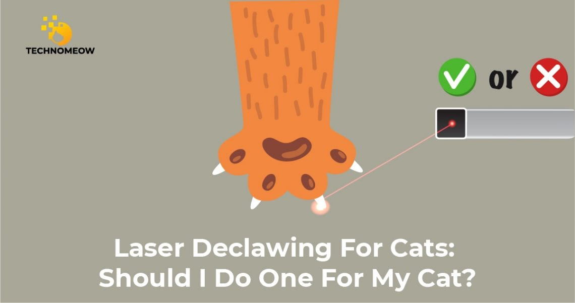Laser declawing for cats: good or bad?