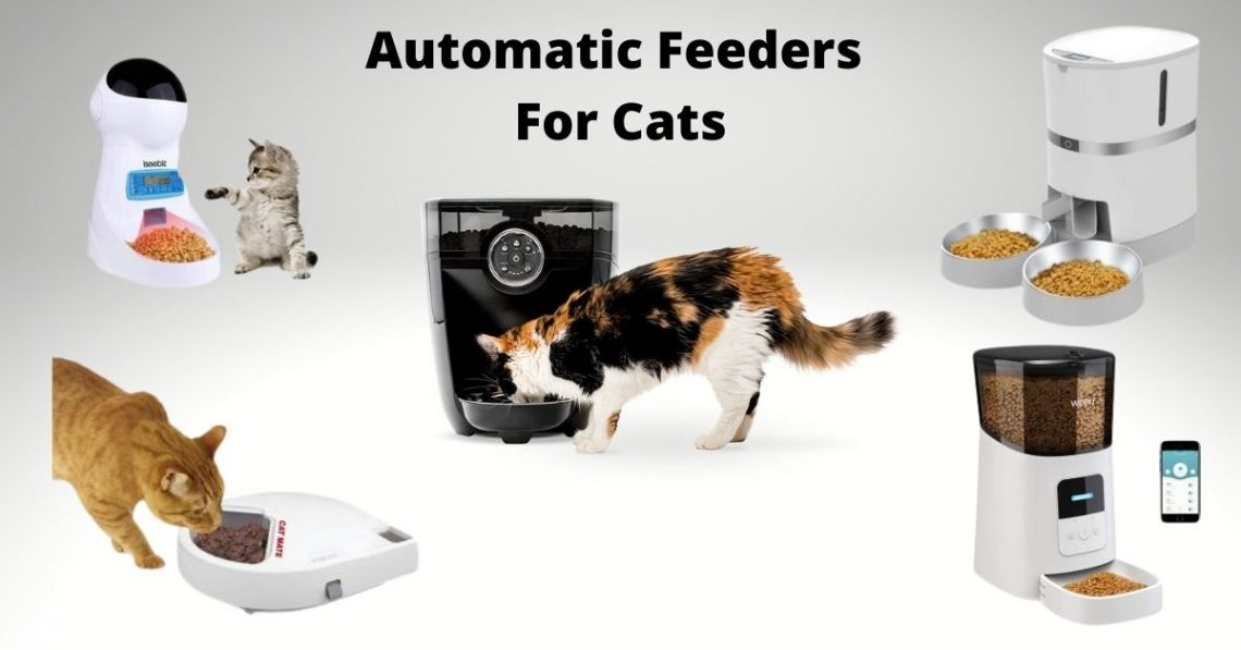 Some of the best cat feeders on the list